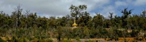 hill pagoda @ Dhammasara