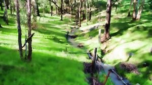 Bodhinyana green valley